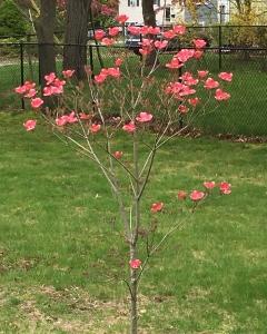 ruby's tree 3